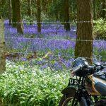 Delcombe Wood
